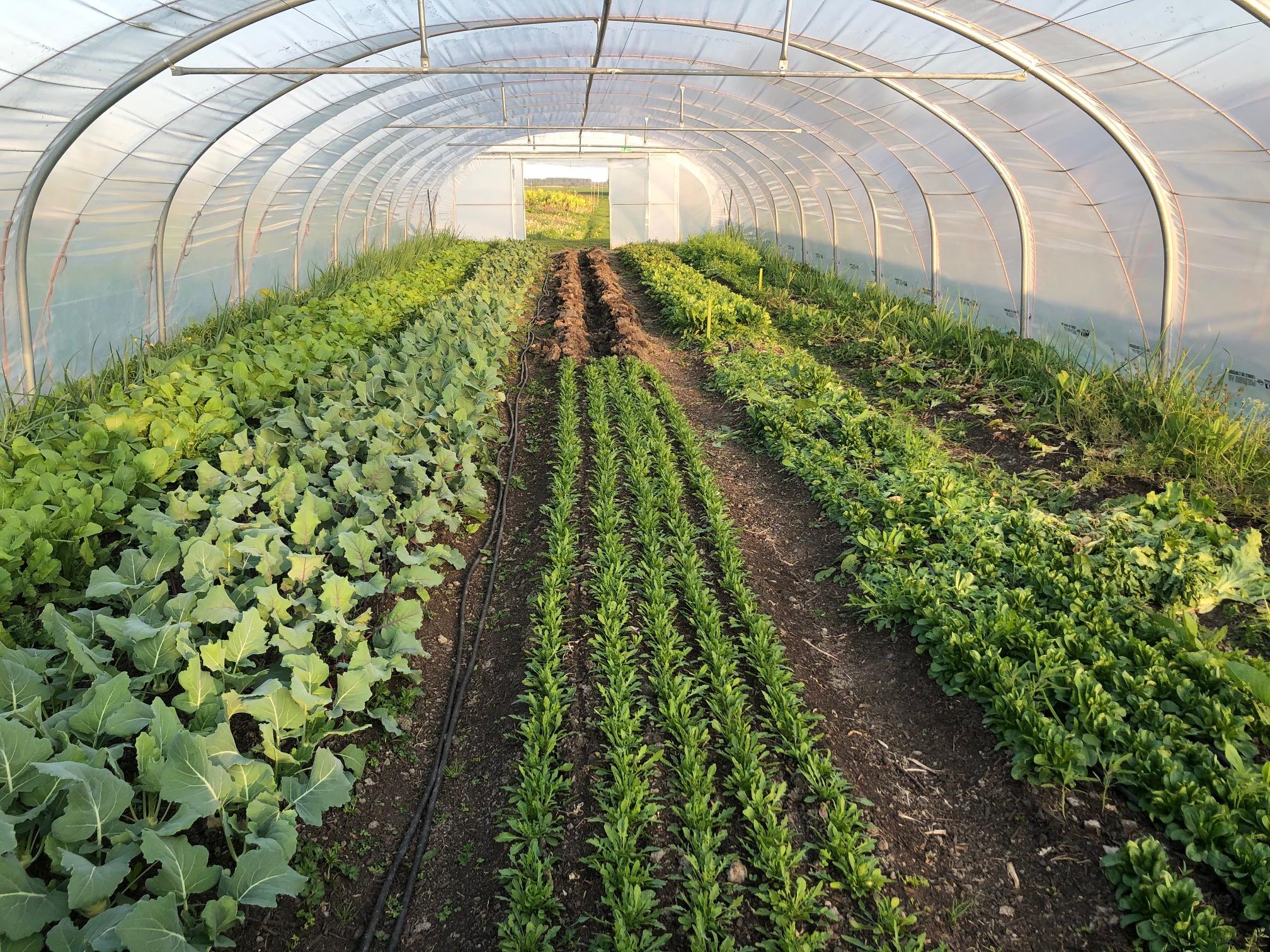 Online bijeenkomst 'Hoe kan je het CSA-groenteseizoen verlengen?'